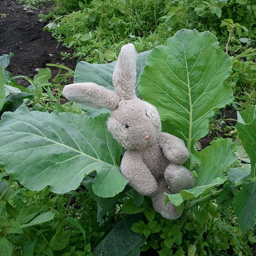 Cabbage patch bunny.