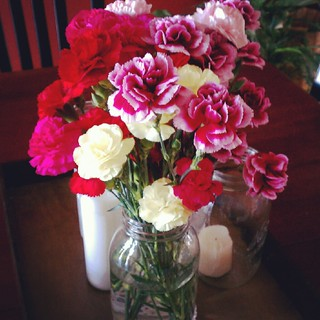 carnations-long lasting