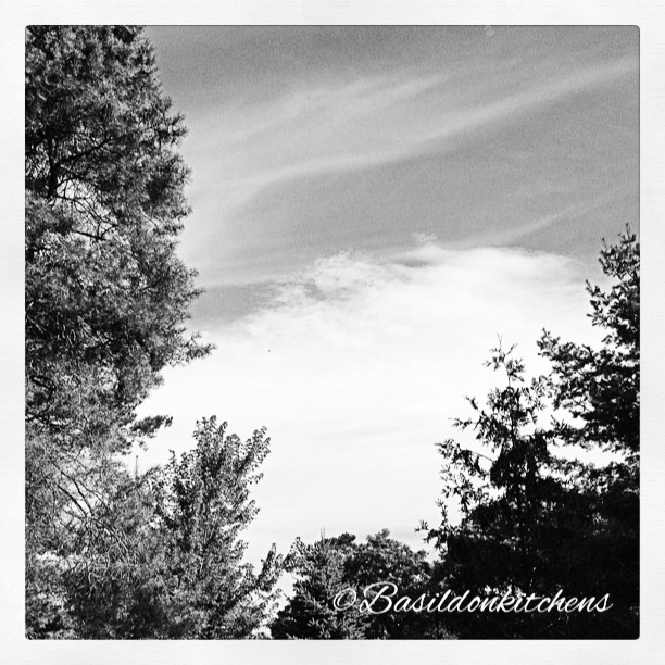 July 27 - black & white {Oh, what a beautiful morning...} #fmsphotoaday #black&white #blackandwhite #morning #sky #garden