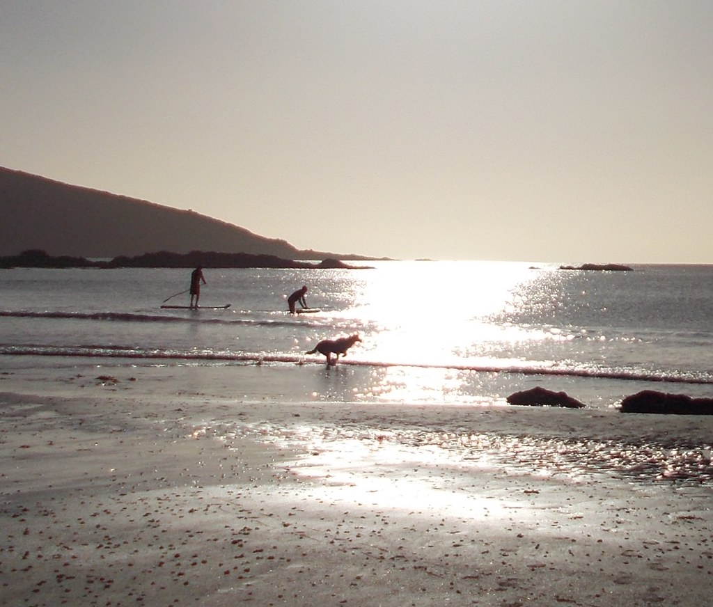 surfers and dog