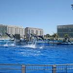Oceanografic Miguel, delfines 01