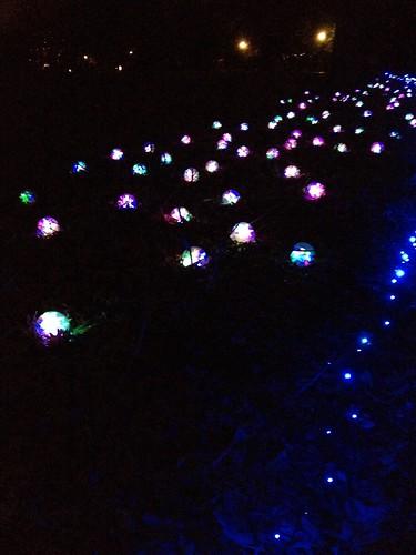 Garden Glow at MoBot