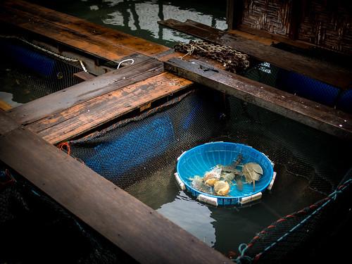 供参观的非正式渔场