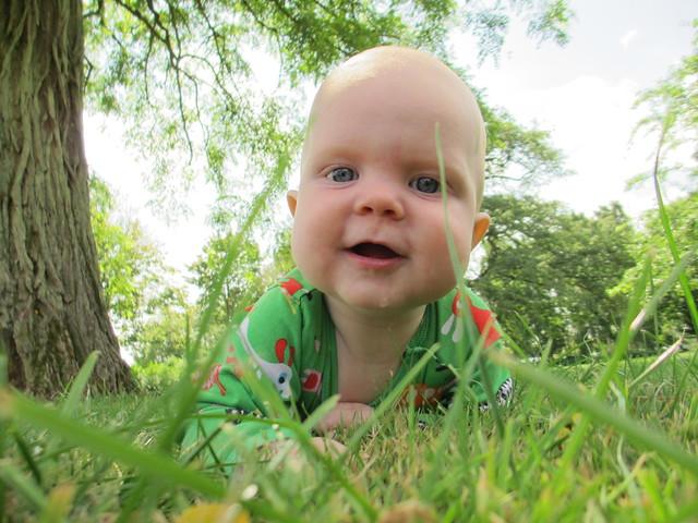 Sander i gräset