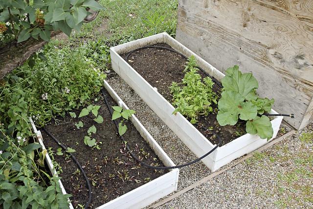 beans, spinach, rhubarb