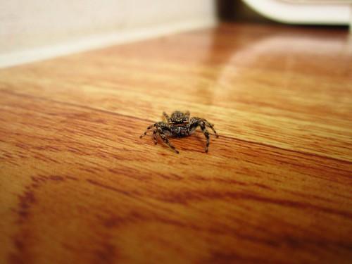 Sunday Spider by pixygiggles