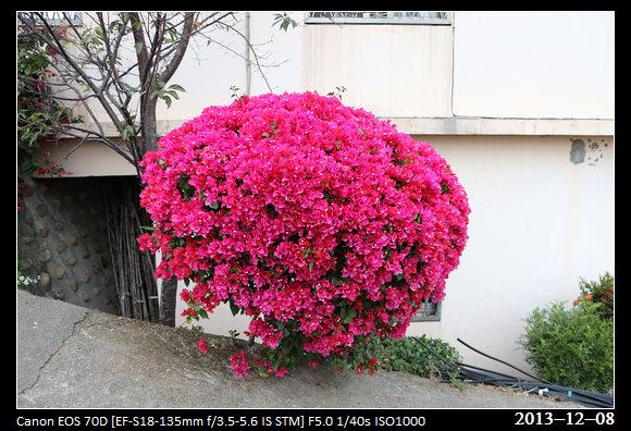 20131208_Flower