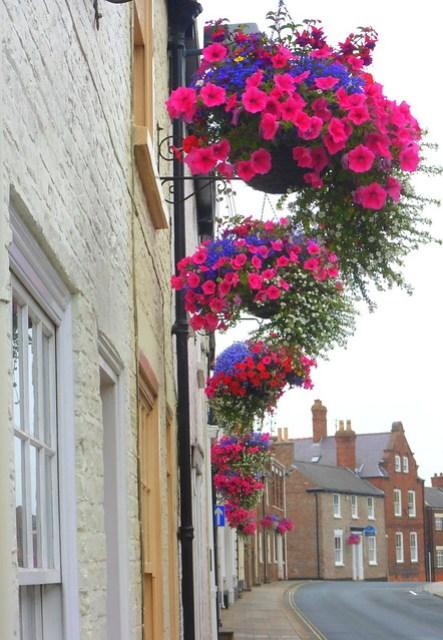 Hedon Hanging Baskets