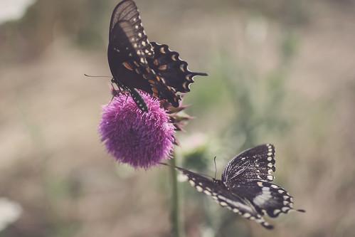 pa {focus on 7} - butterflies