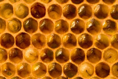 BEES146
