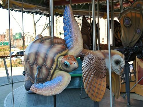 Sea turtle and barn owl