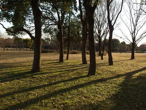 Toneri Park In Adachi City