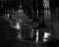20140202_22b_B+W_Coombe Country Park - Standing Water - Avenue of trees