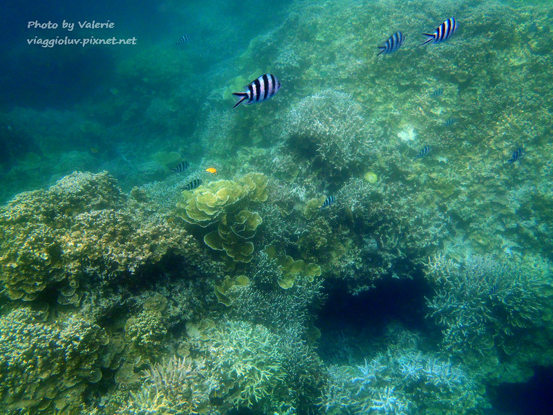 帛琉,浮潛 @薇樂莉 Love Viaggio   旅行.生活.攝影
