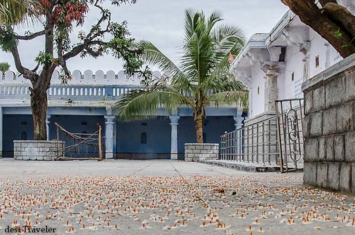 Fragrant orange Harsingar or Parijat floweres carpet in ammapalle temple courtyard