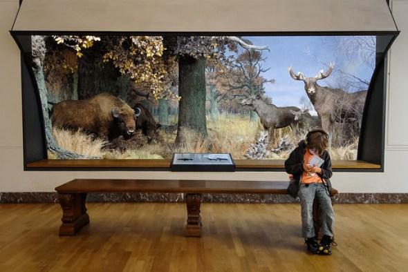Museum Koening #20