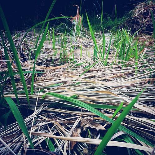 長時沒有種植翻動的土地變得乾瘠。 可這草卻無視環境貧乏,割了長,割了長,割了又長。 這裡也是選佛場。 早安。