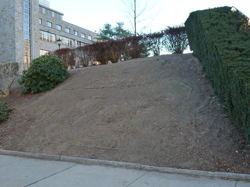 Bare ground
