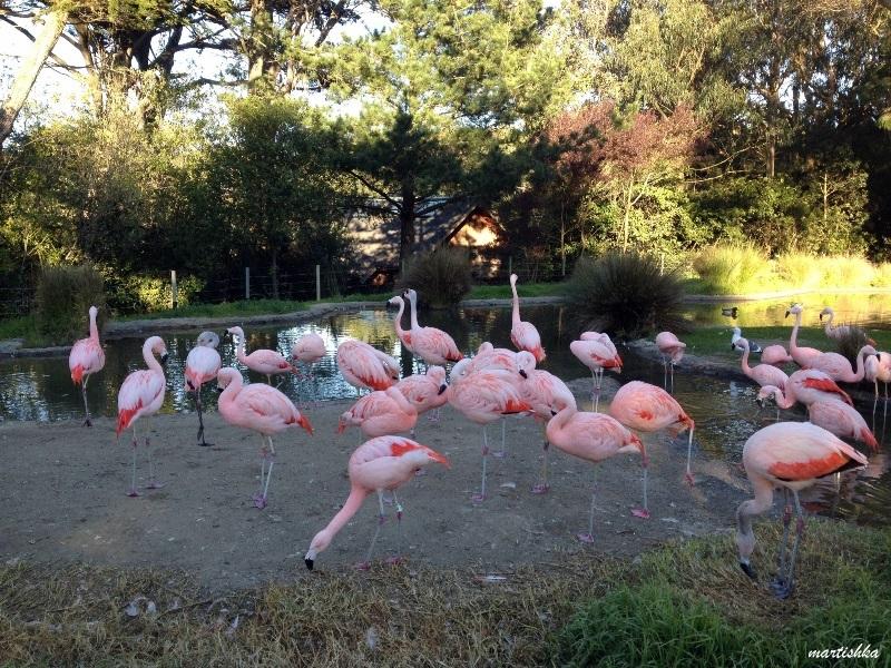 San Francisco Zoo (38)