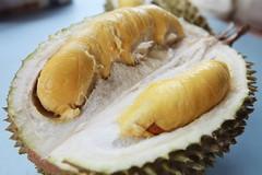 Musang King durian II