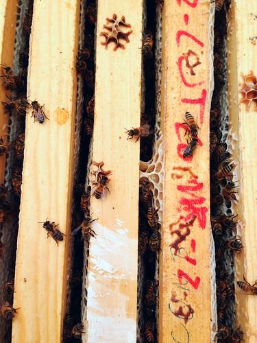 2013 honey