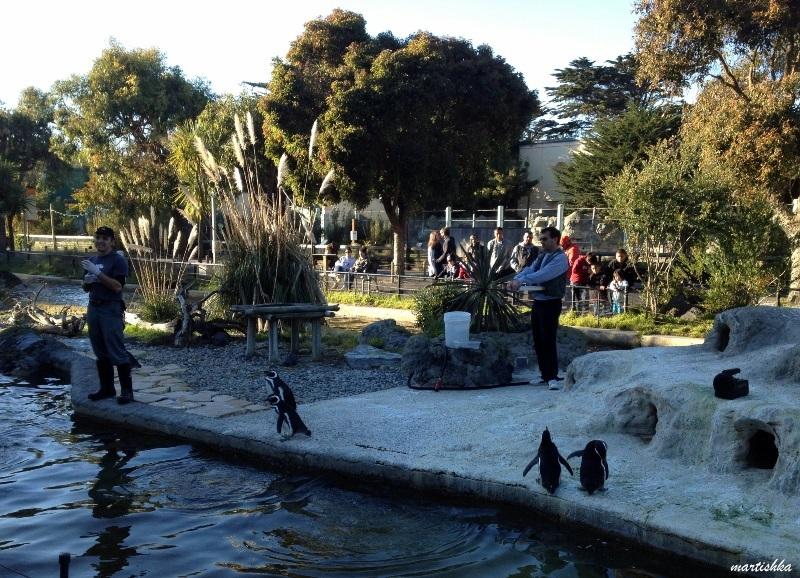 San Francisco Zoo (36)