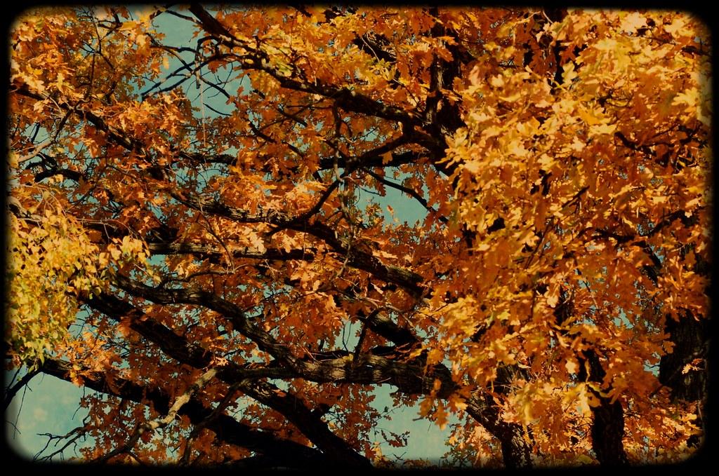 yellow leafs autumn