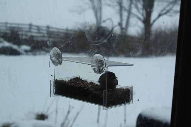 The birds were grateful for the feeders this week