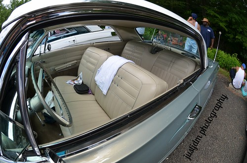 smooth impala (3)
