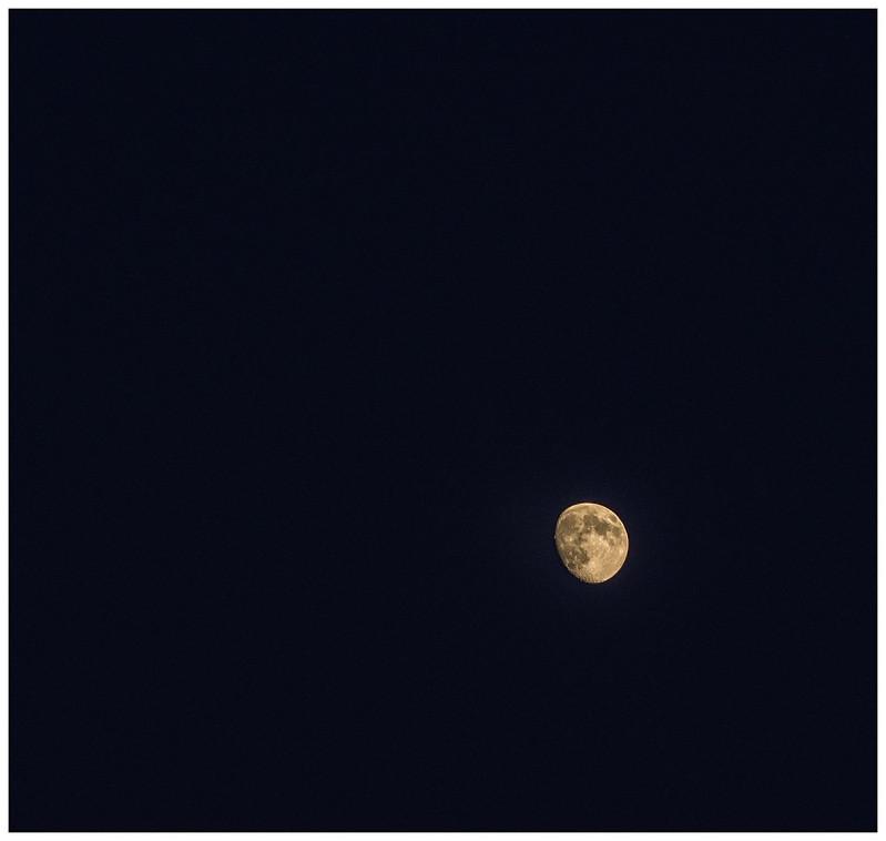 Luna ago  13