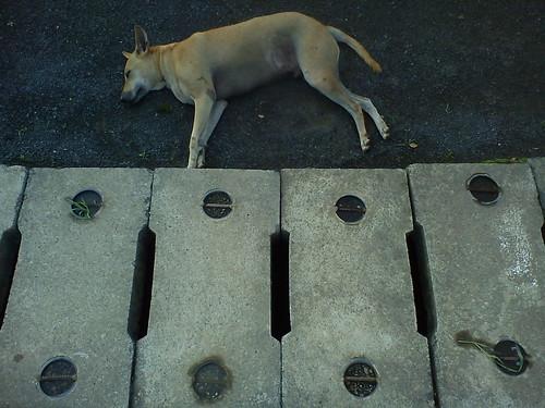 Running in Dreams : Dog by shrihari Pathak