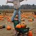 Scarecrow (Patrick)