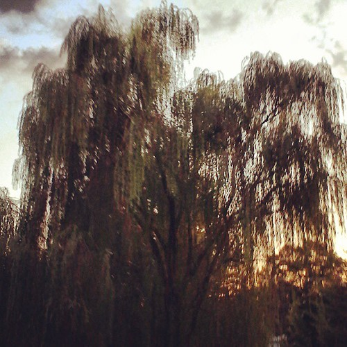 Had to grab a shot of this gorgeous Weeping willow as we grabbed a DE cache and the sun was setting.