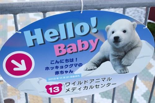 ホッキョクグマの赤ちゃんへの案内板