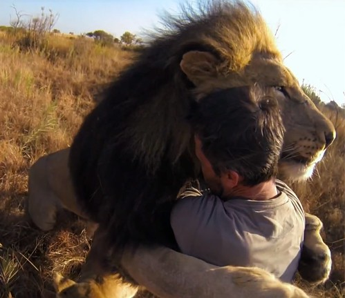 Kevin Richardson, lion whisperer