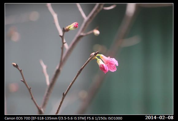 20140208_Flower2