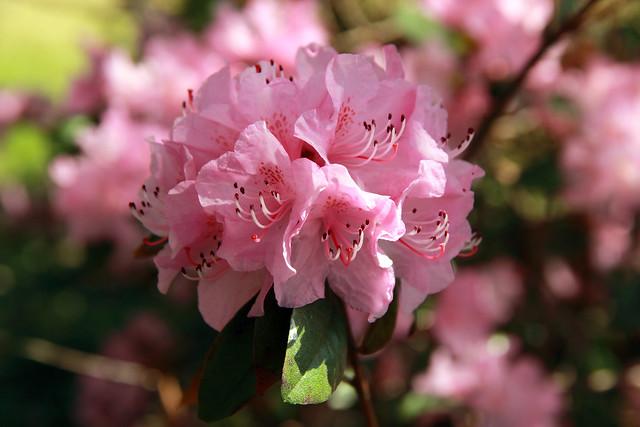 20140427_Spring_Flowers_002