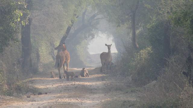 bharatpur pntg
