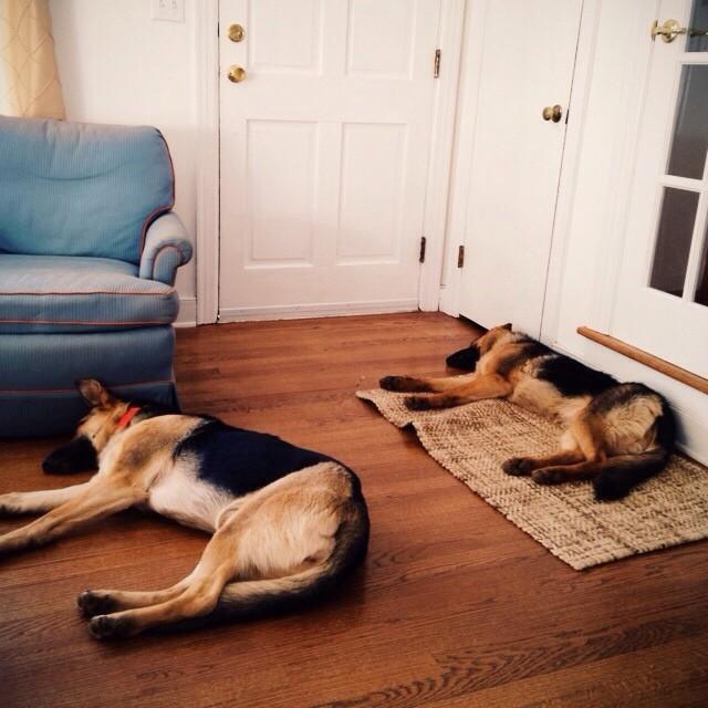 Synchronized sleeping. #babies #doglife #vscocam