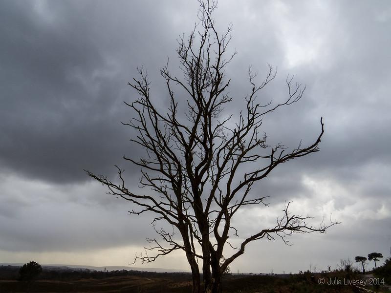 Tree against stormy sky