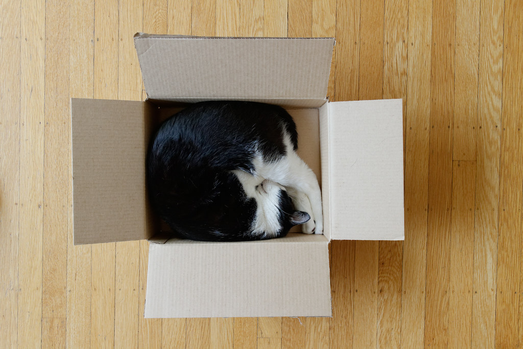 Our cat Boo curled up in an Amazon box