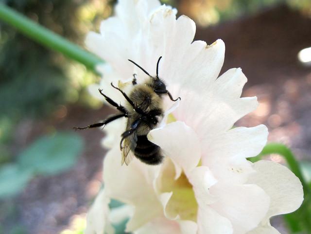 a sleepy bee kicking its legs