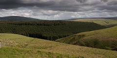 Wauchope Forest
