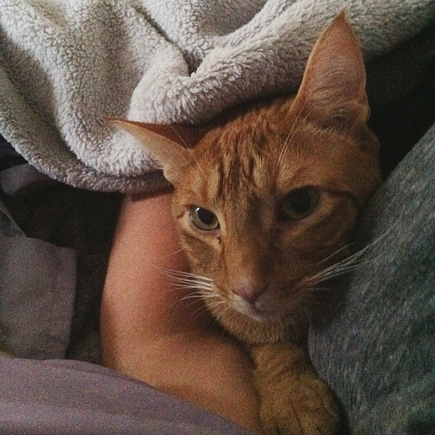 Louie likes to cuddle under the covers in my arms... weirdo.