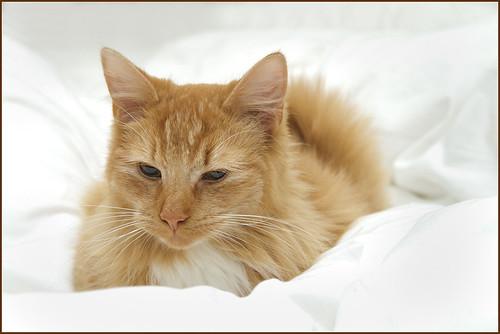 Billy in cat heaven ....