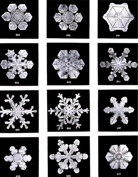 601px-SnowflakesWilsonBentley.jpg