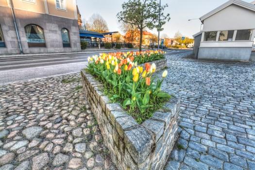 Karlshamn Blommor