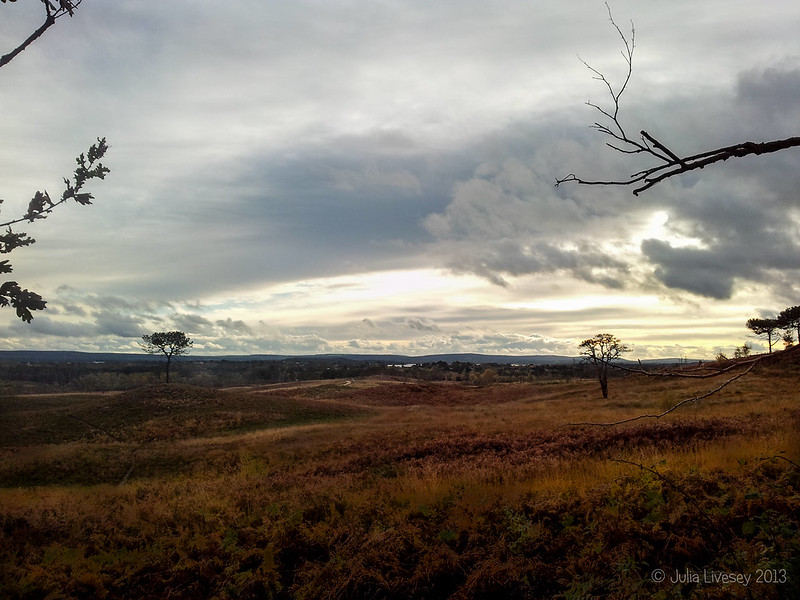 Grey skies over Upton Heath