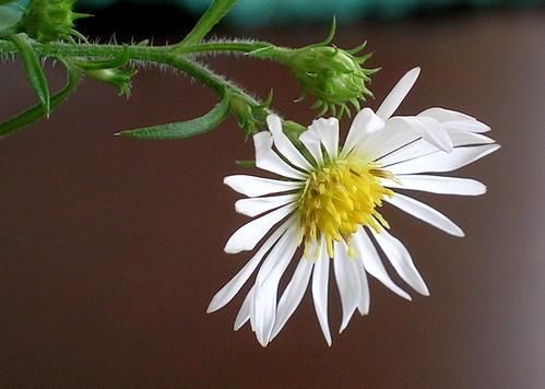 Fall Flower Closeup