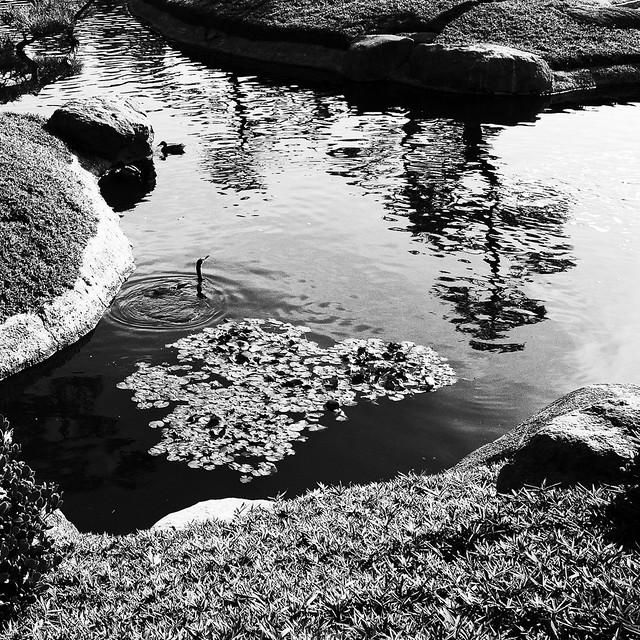 Cormorant and tree reflection